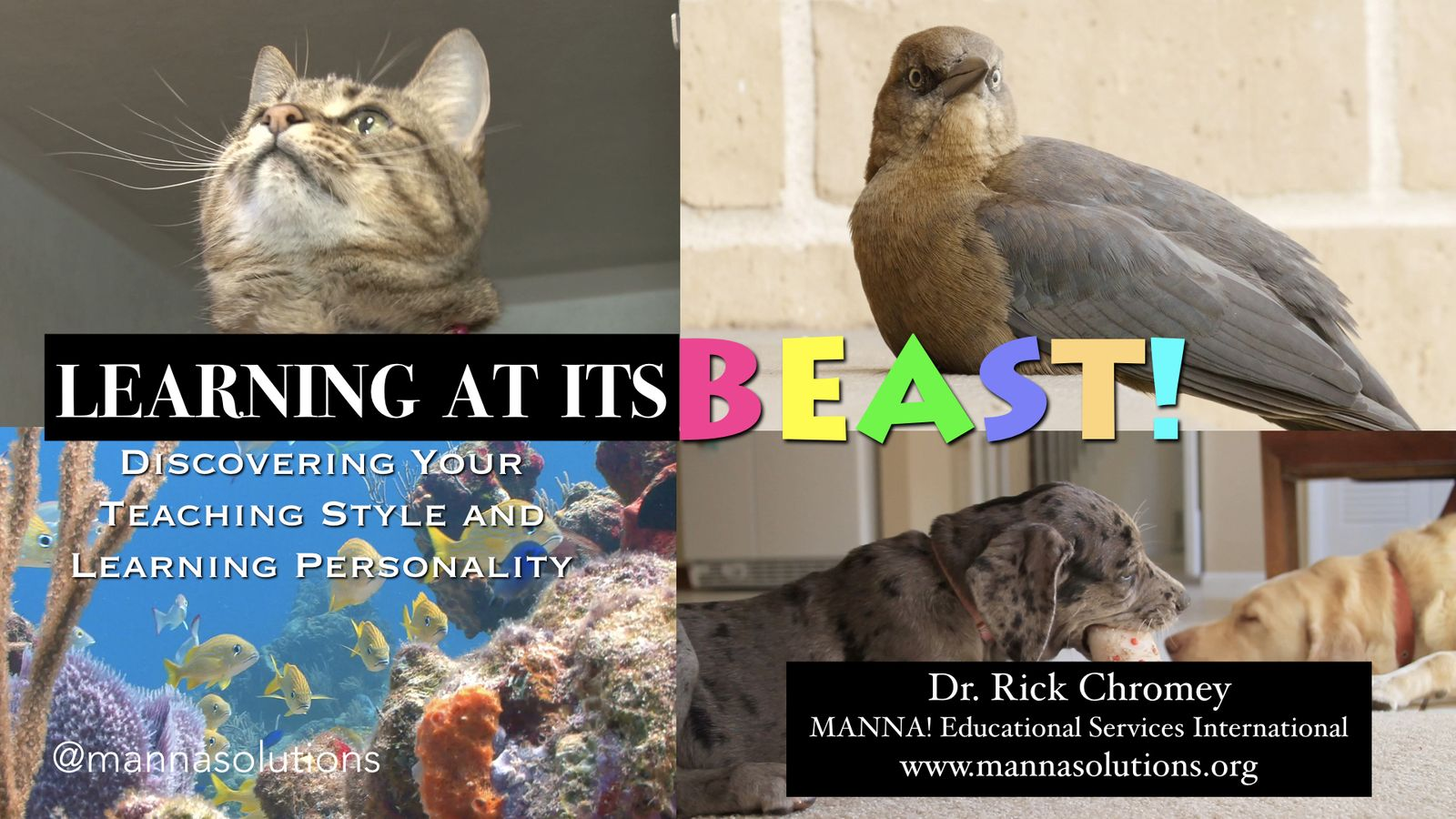 Manna! Solutions - Learning at its BEaST - Slide 001