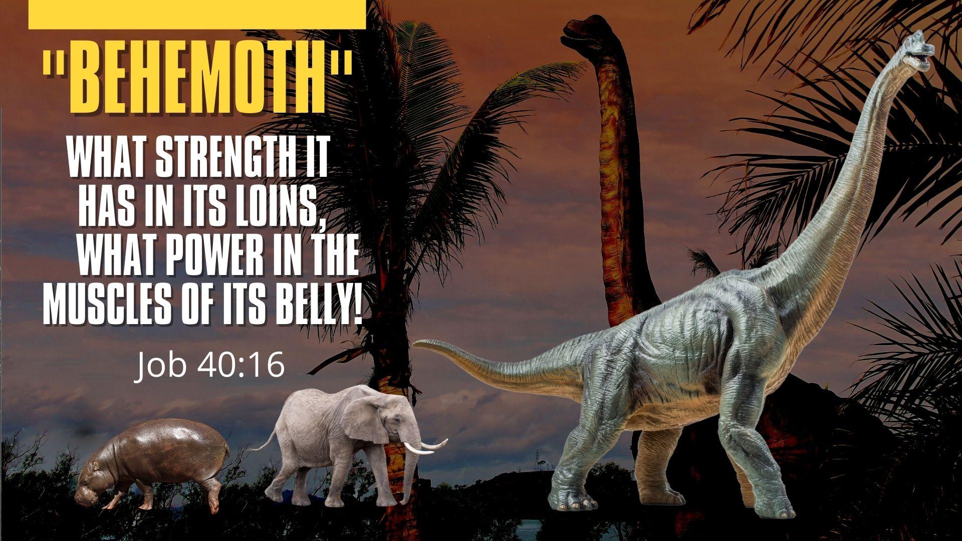 Behemoth.Job 40.16