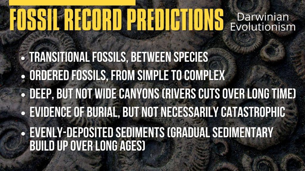 Fossil Record Predictions.Evolutionism